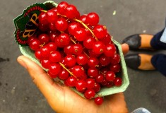 Paris - Currants - What's Haute in the World